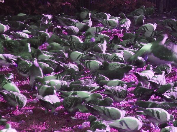 Las palomas de Paris