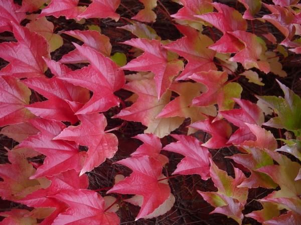 Y las hojas se transformaron en flores