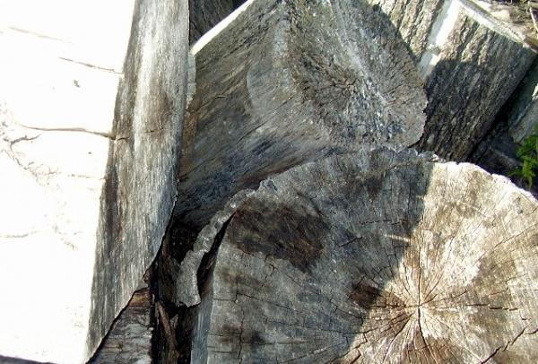 ¿Piedras o troncos?